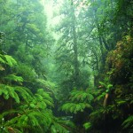 Arthur-River-rainforests-Ted-Mead