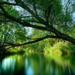 rainforest-rainforest-32472901-1600-900